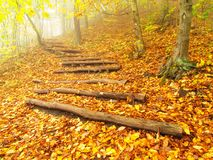 Wooden trunk steps in colorful autumn forest, tourist footpath. Stock Images