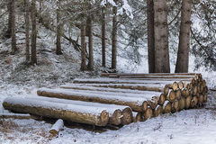 Wooden trunks lined up in the snow-covered forest Stock Photo