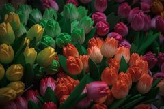 Wooden tulips. On the market in Amsterdam, Netherlands Royalty Free Stock Images
