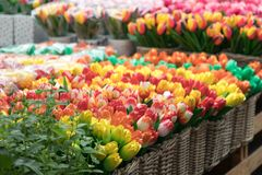 Handmade Wooden Tulips of the Netherlands Royalty Free Stock Photos