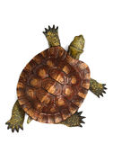 Wooden turtle Royalty Free Stock Photography