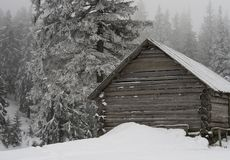A wooden uninhabited hut surrounded with fir forest Stock Images
