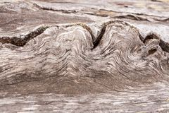 Wooden unusual texture. Close-up wavy pattern of fiber of old wo Stock Photography
