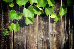 Wooden veranda with grape leaves Stock Photo