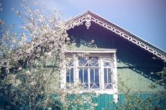 A wooden village house of blue color with a carved roof, next to which a cherry Bush royalty free stock image