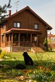 Wooden Village House with Yard. Blooming Flowers,Pine trees and Black dog. Wooden village house. Garden with Green Grass, Blooming flowers.Black Dog royalty free stock photography
