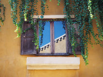 Wooden vintage window with creeper leaves plant Royalty Free Stock Photography