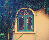 Wooden vintage window with creeper leaves plant Royalty Free Stock Photos