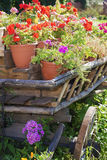 Wooden wagon decorated with flowers Stock Images