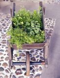 Wooden wagon decorated with plants in spring Stock Photo