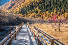 Wooden walk way in Colorful autumn Royalty Free Stock Images