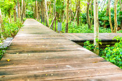 Wooden walk way among the green forest garden Royalty Free Stock Photos