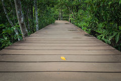 Wooden walk way among the forest Stock Photography