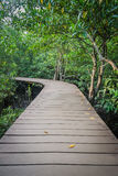 Wooden walk way among the forest Royalty Free Stock Image