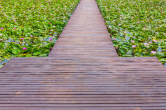 Wooden walk way Stock Photography