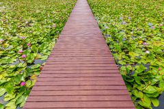 Wooden walk way Stock Images