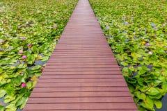 Wooden walk way Stock Images