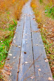 Wooden walk way nature fall season. Withered grass Royalty Free Stock Photography