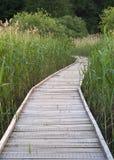 Wooden walking path Royalty Free Stock Photo
