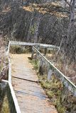 Wooden Walking Path through Forest Royalty Free Stock Photography