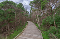 Wooden walking path through the greenery Stock Photos