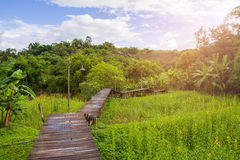 Wooden walking path over rice field. With small hill background Stock Image