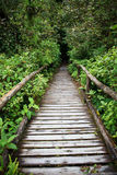 Wooden walking way in hill evergreen forest of Doi Inthanon Chia Stock Photos