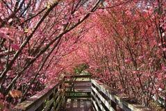 Free Wooden Walkway Stock Images - 12257994