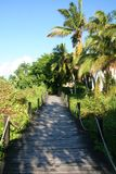 Wooden Walkway. A wooden walkway through a jungle in the Dominican Republic Stock Photo