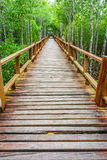 Wooden walkway in abundant mangrove forest Stock Image