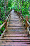 Wooden walkway and abundant mangrove forest in Southern Thailand Stock Image