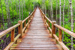 Wooden walkway in abundant mangrove forest of Thailand Royalty Free Stock Images
