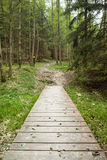 Wooden walkway along forest Royalty Free Stock Images