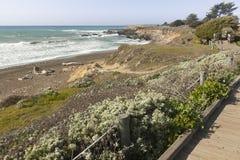 Wooden Walkway Along Ocean Coast Stock Photography