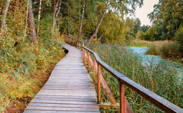 Wooden walkway in autumnal forest Royalty Free Stock Images