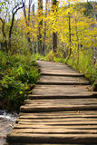Wooden walkway. Wooden bridge across the lake. The bridge goes overgrown Stock Photography