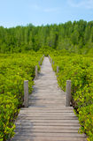 Wooden walkway bridge on Ceriops Tagal field in mangrove forest Stock Photos