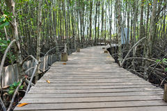 Wooden walkway bridge with mangrove tree in mangrove forest Stock Photos