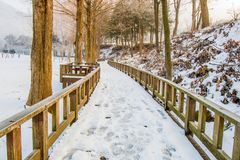 Wooden walkway covered with snow  public park. Royalty Free Stock Image
