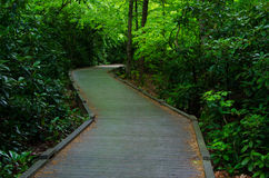 Wooden Walkway in an Early Spring Forest Royalty Free Stock Photography