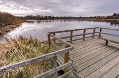 Wooden walkway on edge of a marshy lake, Victoria, BC Royalty Free Stock Photos