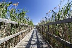 Wooden walkway between fences. Royalty Free Stock Photography