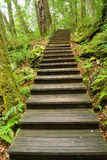Wooden walkway into forest Royalty Free Stock Photography