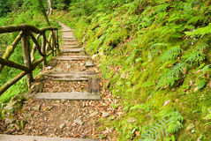 Wooden walkway into the forest Stock Photography