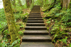Wooden walkway into the forest Royalty Free Stock Photo