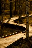 Wooden walkway through forest Royalty Free Stock Images