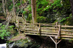 Wooden Walkway in the Forest Stock Photo
