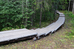 Wooden walkway in the forest Royalty Free Stock Photos