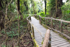 Wooden walkway. In forest green at the highest mountain During heavy fog in Thailand Royalty Free Stock Images
