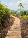 Wooden walkway through a forest Royalty Free Stock Image